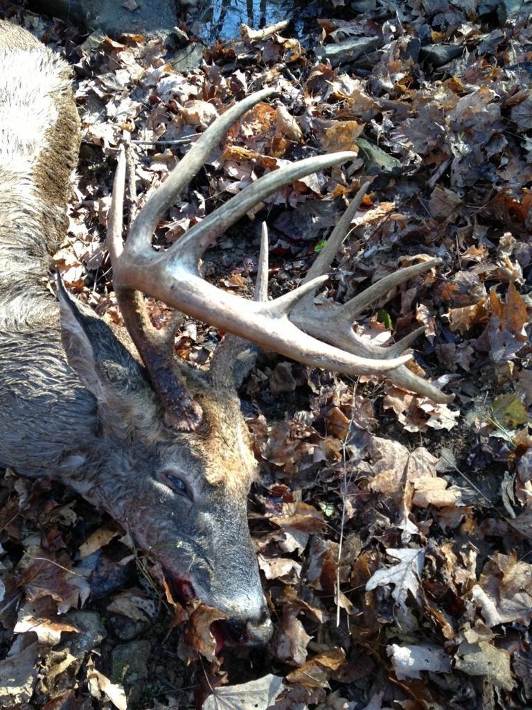 Dang dead deer u didn t shoot sucks not as heart breaking as this